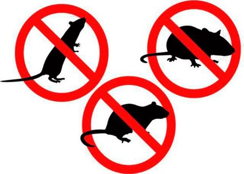 control de roedores e insectos Tenerife
